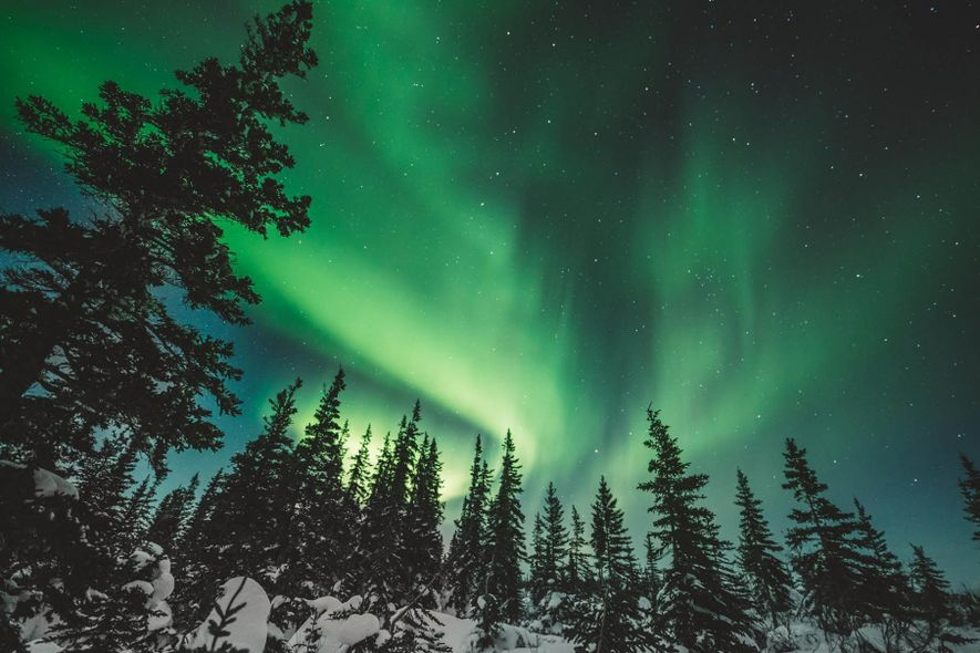 The Northern Lights near Churchill are especially dramatic in winter, contrasted against a frozen, white wonderland.