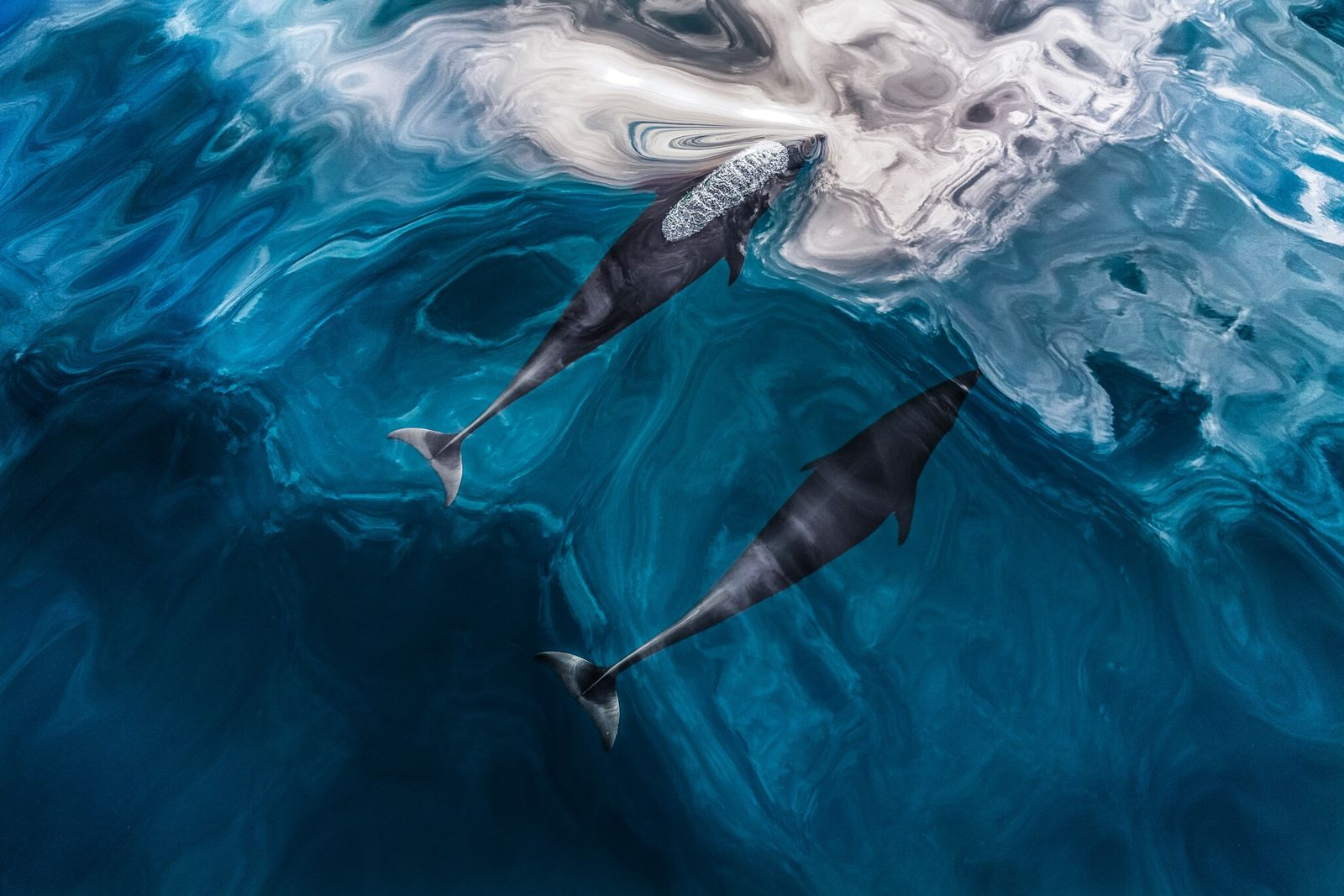 Echolocation is nature's built-in sonar. Here's how it works. - National Geographic UK