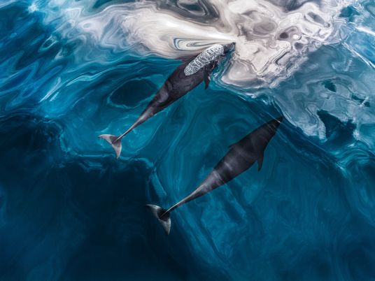 Echolocation is nature's built-in sonar. Here's how it works.