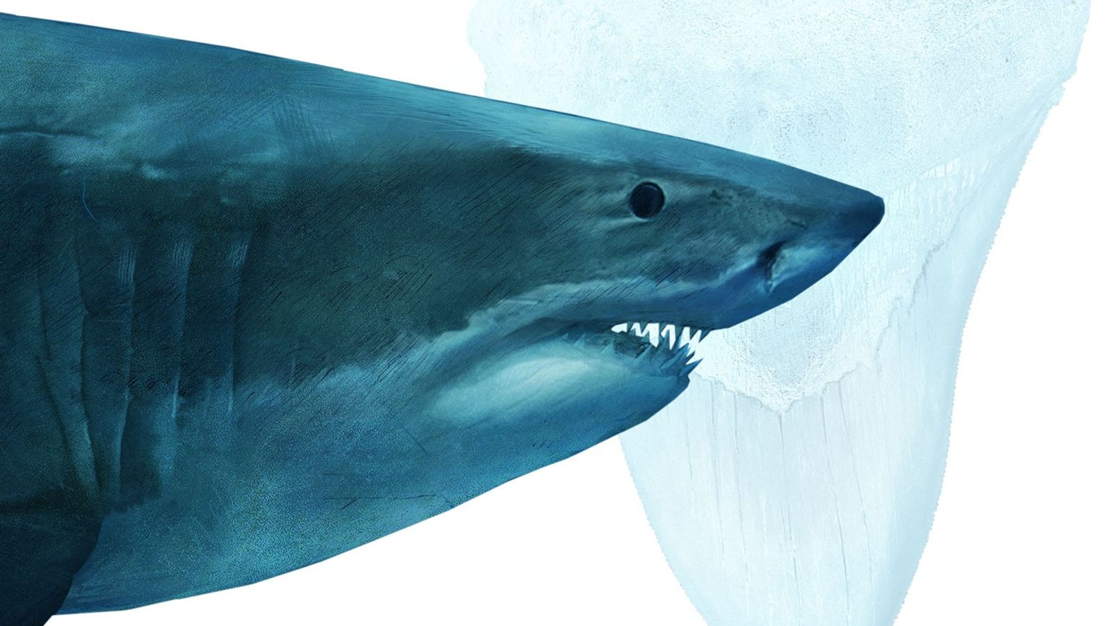 Megalodon were the rulers of the ancient oceans. The massive creatures grew up to 60 feet ...