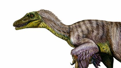 Why Velociraptors are among the most misunderstood dinosaurs