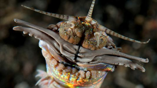 Giant predatory worms lurked beneath the ancient seafloor, fossils reveal