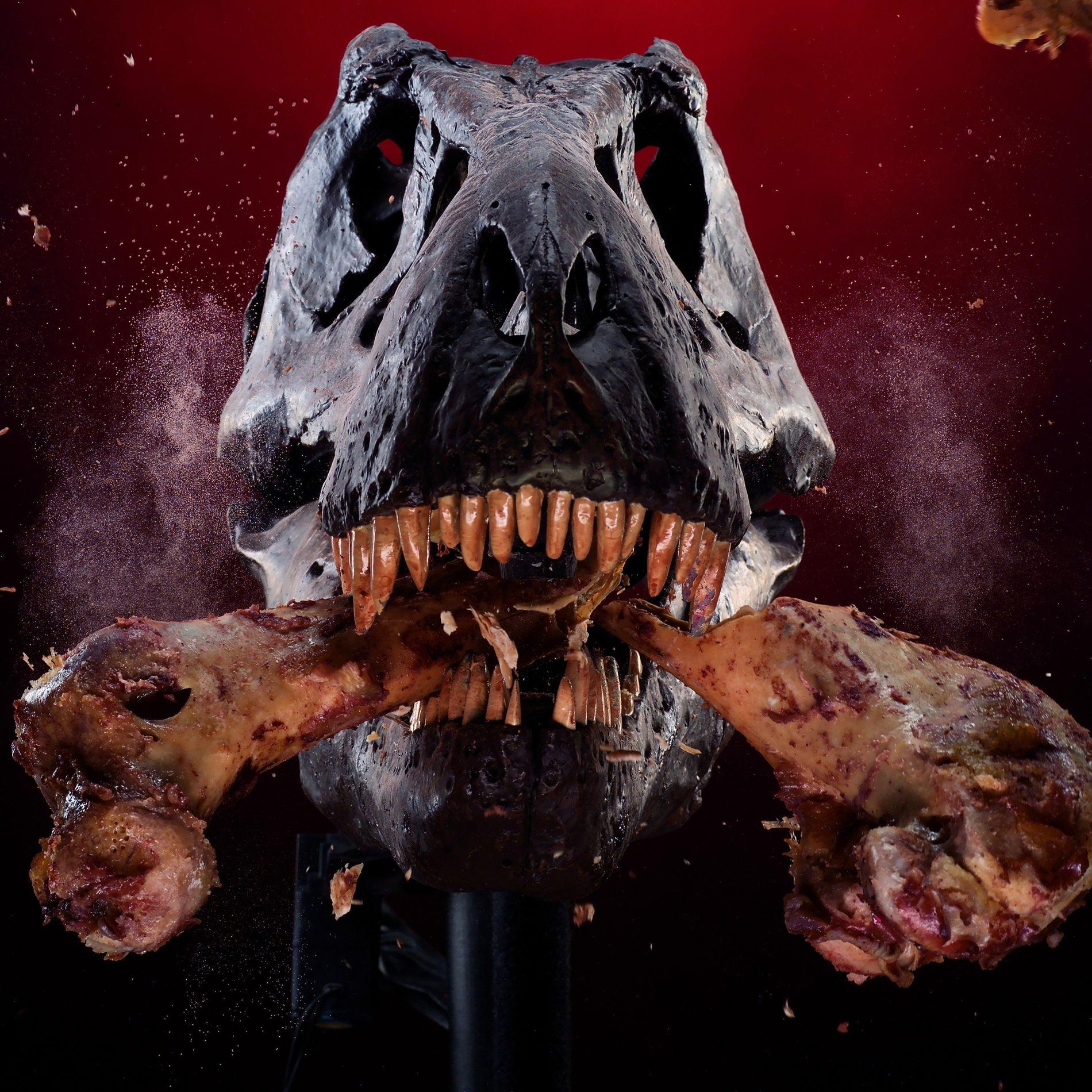 A mechanical T. rex skull cracks a bone as part of a study of its powerful ...