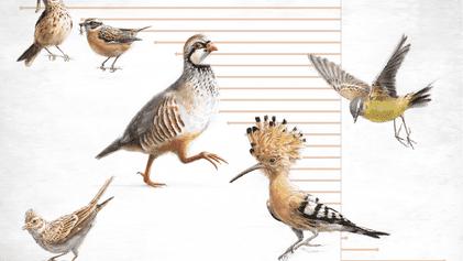 Industrial Farming a Cause of Plummeting Bird Populations