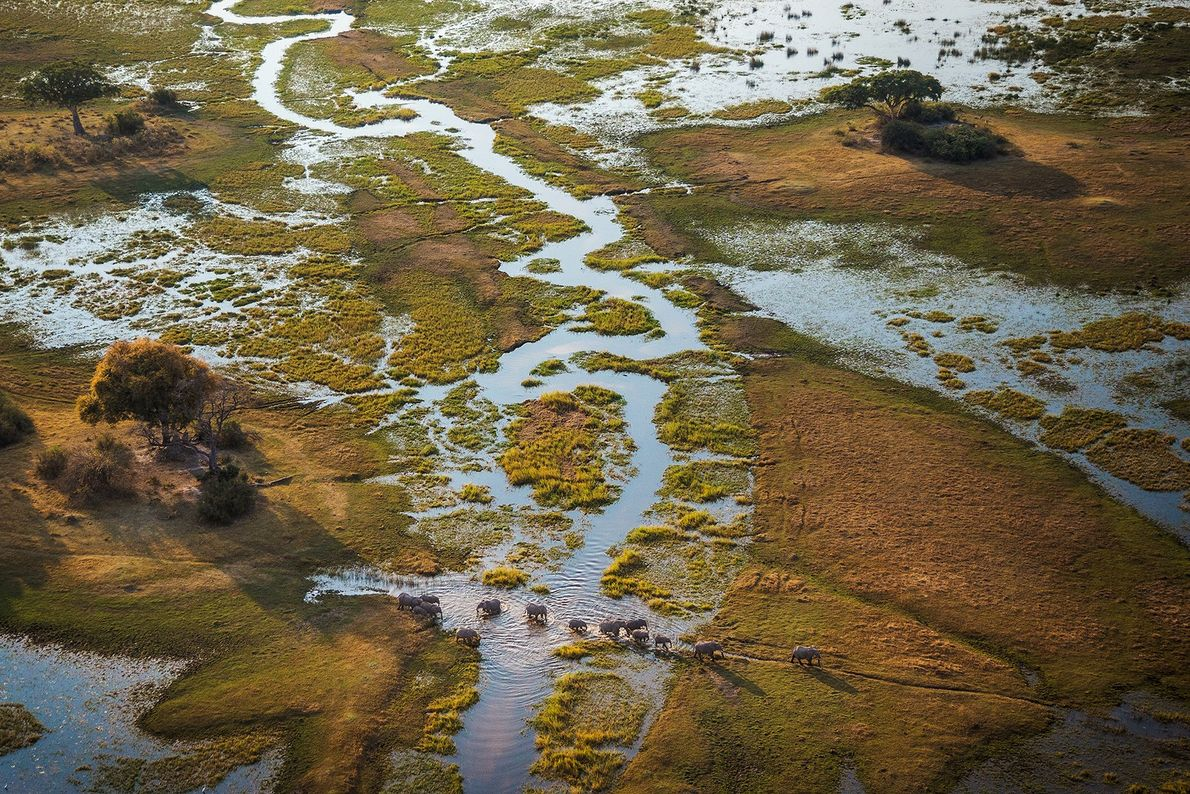 Complex, ever changing patterns of water and land support the bountiful wildlife and vegetation of Botswana's ...