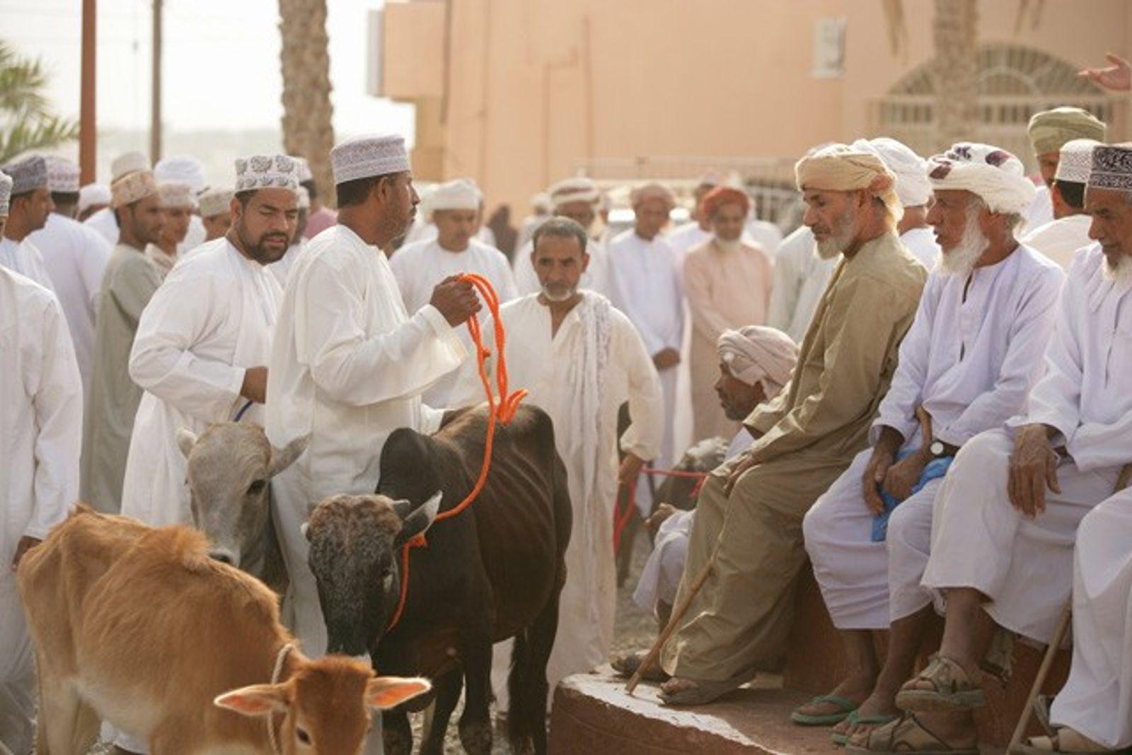 Oman: Desert, dunes & dhows