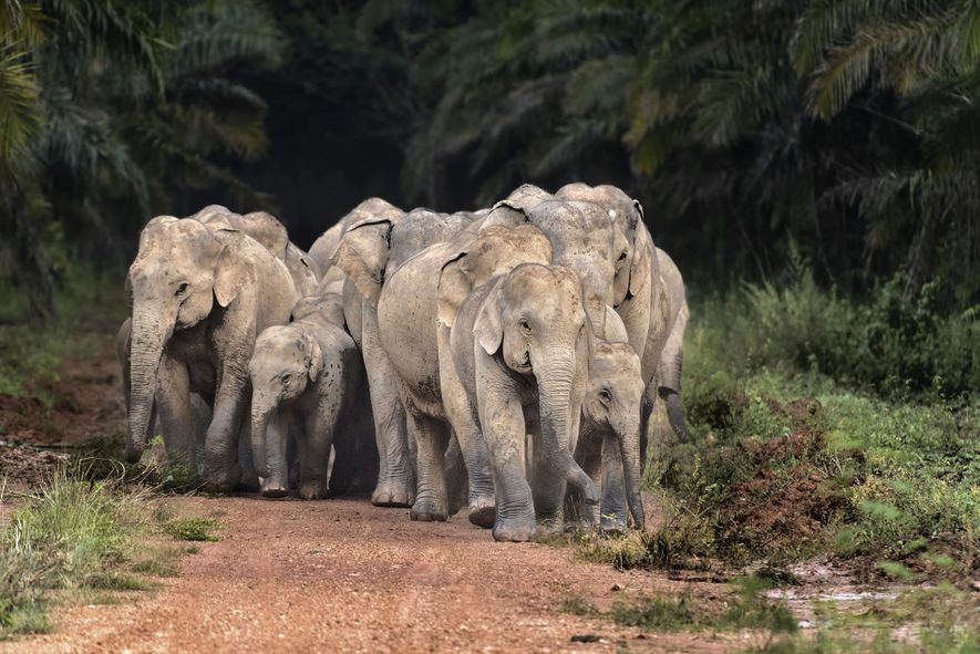 Why wildlife tourism matters