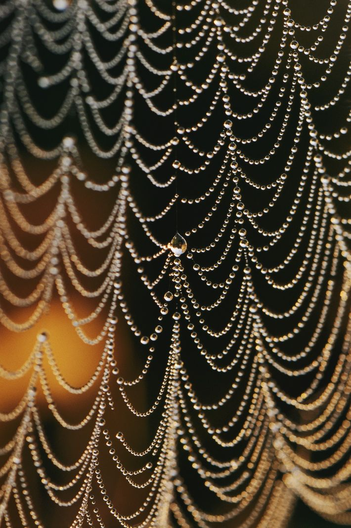 An Orb-weaver spider web in the early morning dew.