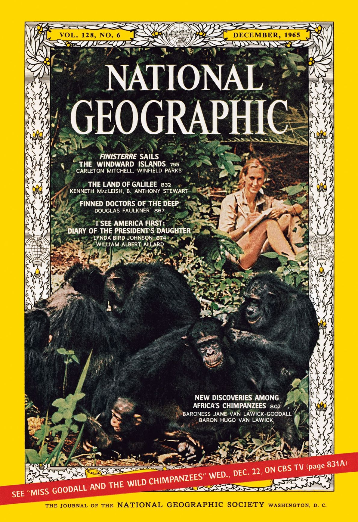 Pioneering primatologist Jane Goodall and her chimps were on the December 1965 cover.