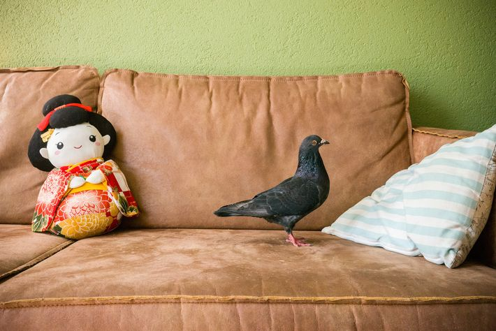 As Doest's daughters play in their rooms, the rest of the house is relatively quiet. Dollie ...