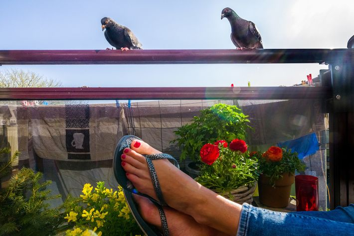 Maaike, Doest's wife, enjoys the spring weather on the balcony while the two pigeons keep watch. ...