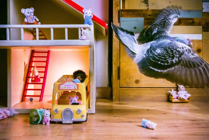 Ollie takes almost daily walks through the living room. One day Doest noticed him go into ...