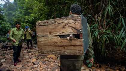 Saving The World's Most Trafficked Mammal