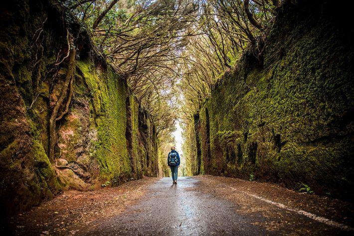 Parque Rural de Anaga: a sprawling nature-filled reserve in Tenerife's northeast.