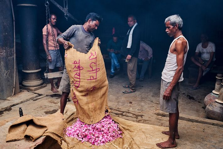 A sack of roses is delivered to the Pranjal Singh distillery, one of about 350 distillers ...