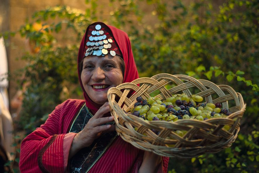 Collecting grapes for wine production in a vineyard in Armenia.