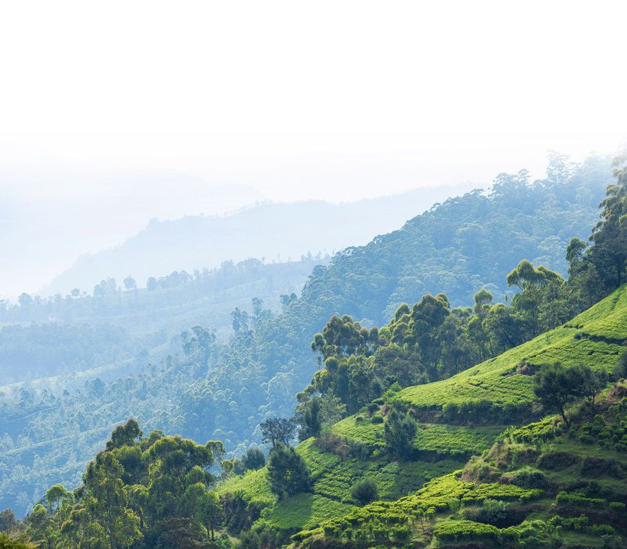 Five ways to discover the beauty of Sri Lanka's highlands