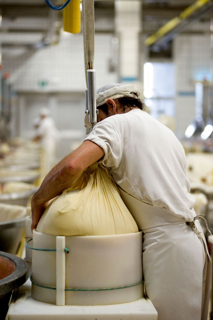 Parmigiano Reggiano is cooked at 55C before being hauled out of metal vats using muslin cloths.