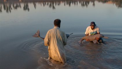 One of world's rarest dolphins rebounding in Pakistan