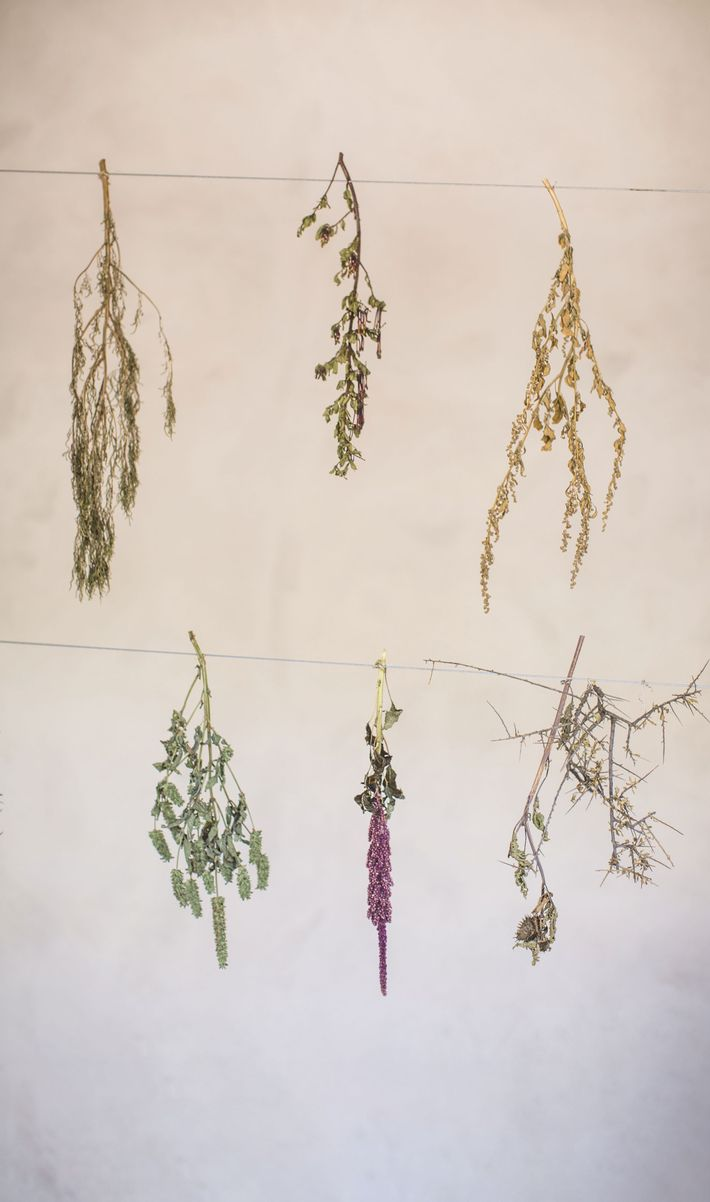 Herbs and flowers hang to dry