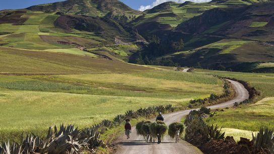 Farming in the Andes near Urubamba.