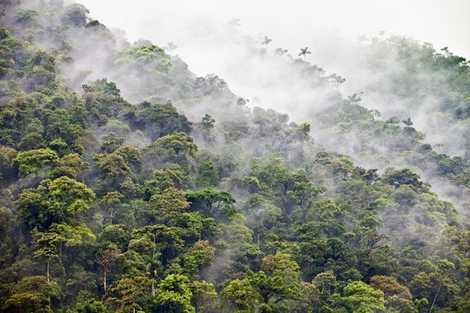 Peru: Welcome to the jungle