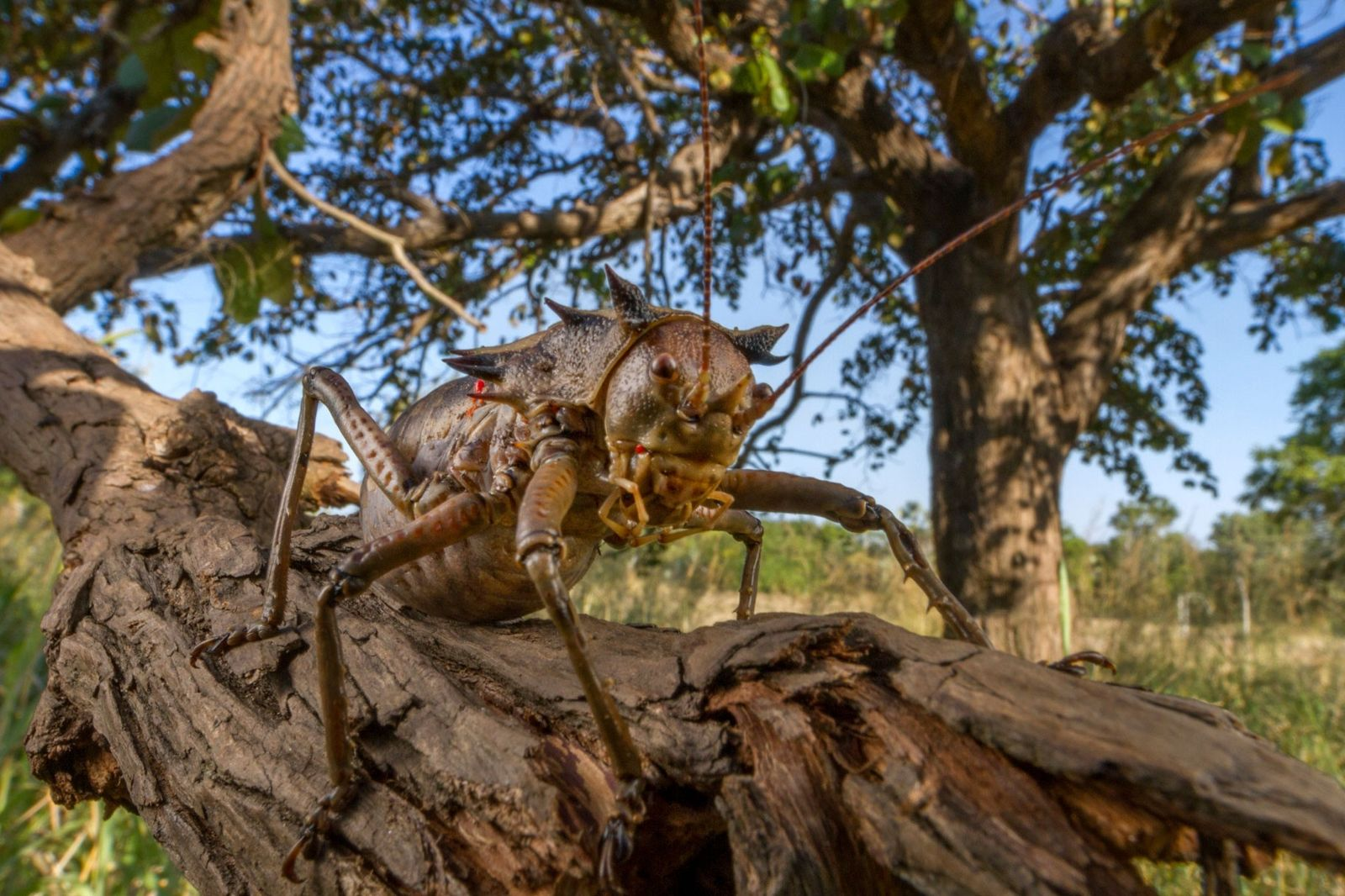 Blood-squirting insects and more tiny creatures flourish in African park
