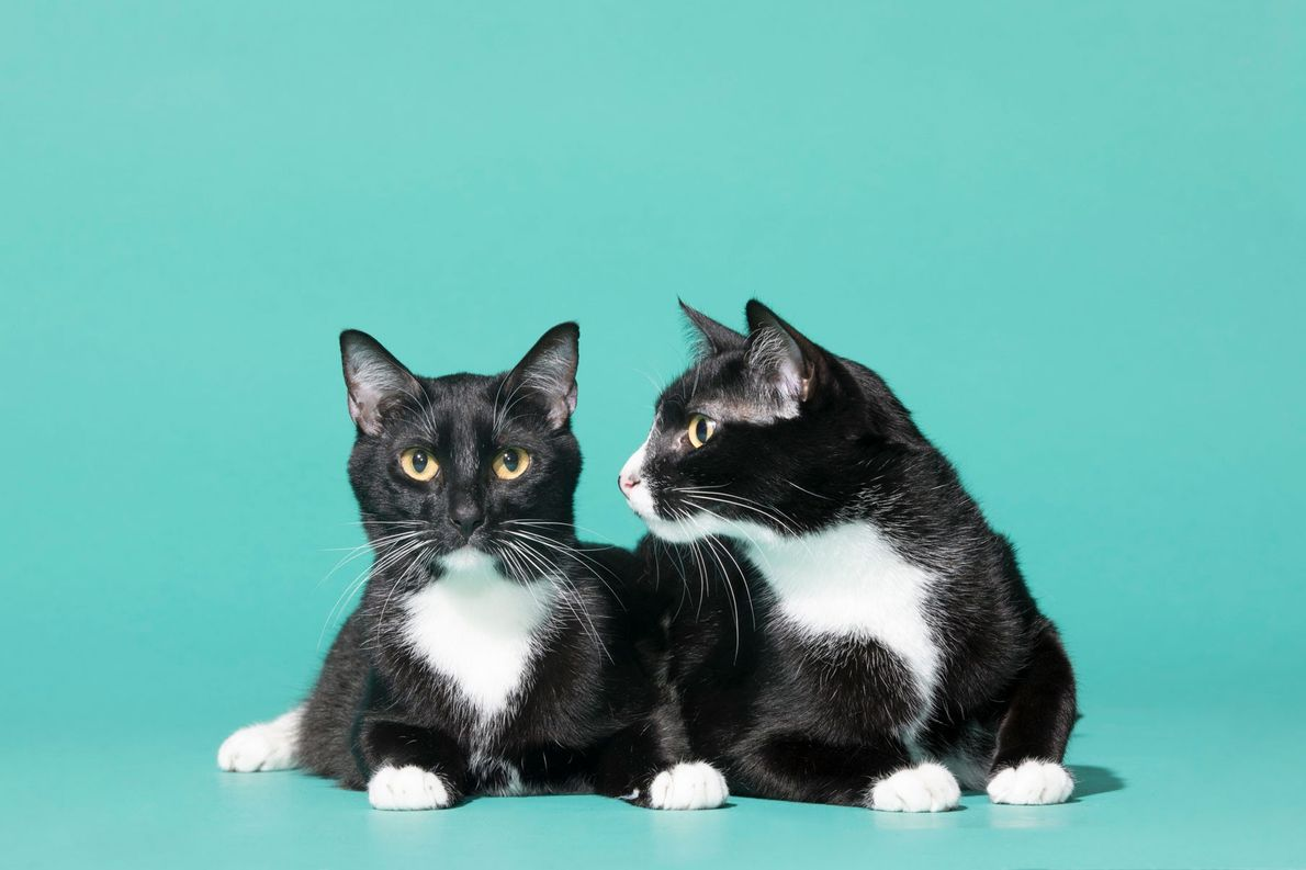 """""""Leo and Louie are brothers. They are very chatty, best friends, and will sit for treats!"""" ..."""