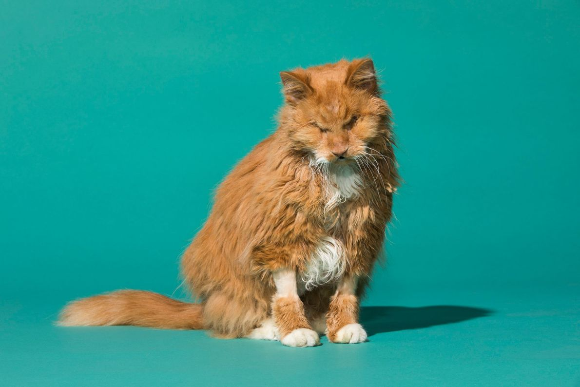 """""""Winky lost both her eyes to an infection when she was living in the shelter, but ..."""