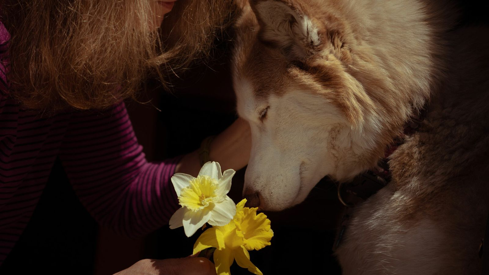 A therapy dog named Casey snuggles with Janice—whose last name was not provided—in Massachusetts on April ...