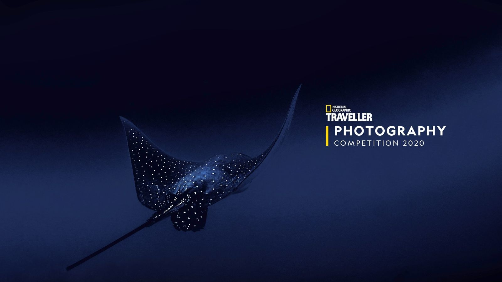 Finalist: Francesca Page. A spotted eagle ray, shot off Cocos Island, Costa Rica, during a dive.