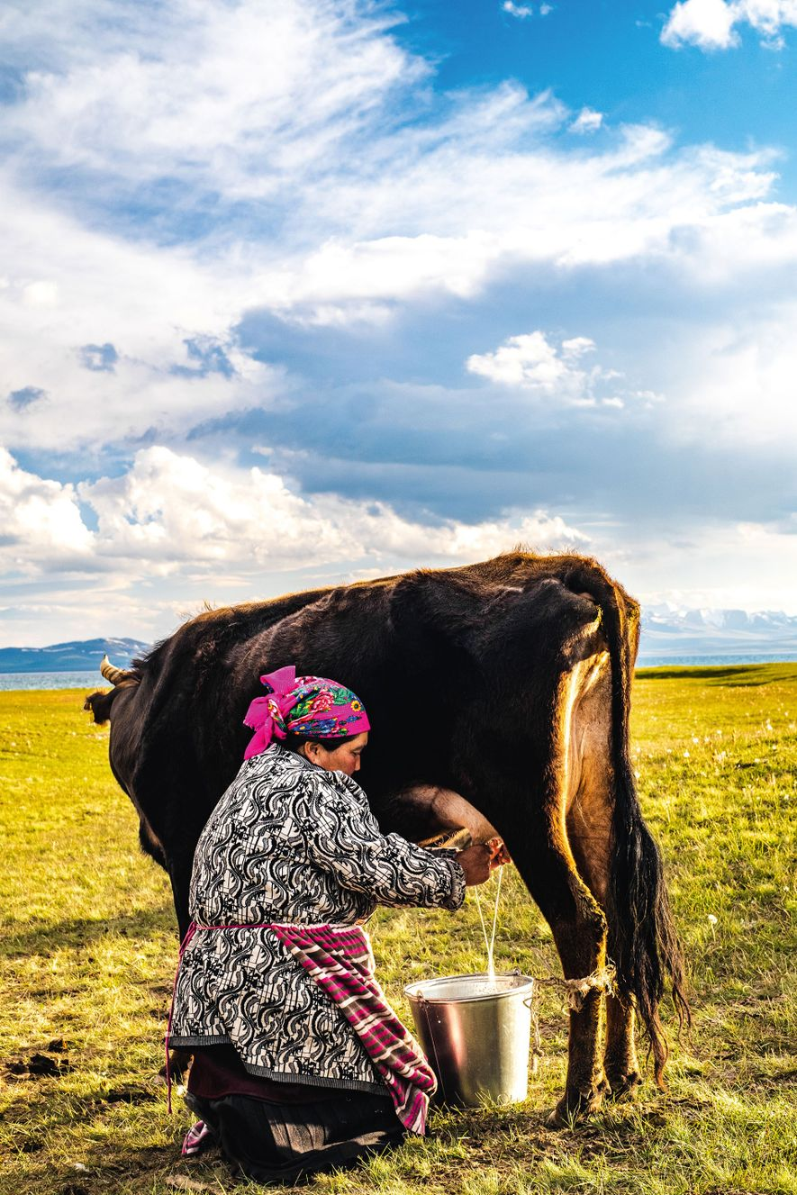 It is usually the woman's role to milk the animals and make dairy products: kumis, kaymak, ...