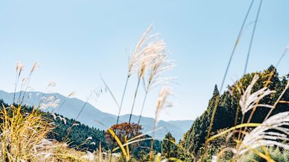 Photo story: hiking the Kiso Valley on Japan's ancient Nakesendo Way