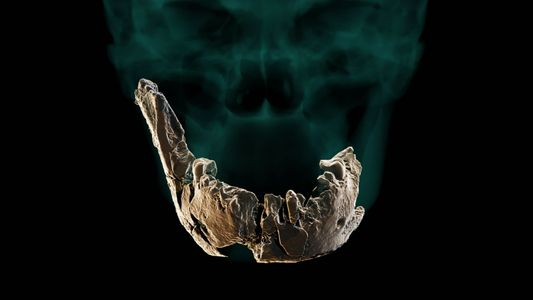 Puzzling skull discovery may point to previously unknown human ancestor