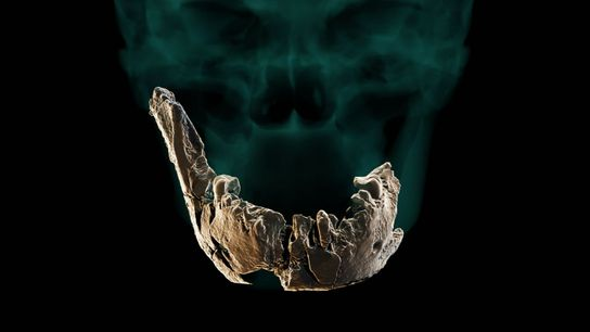 Researchers used the scant skull remains from Nesher Ramla to create a a virtual reconstruction a ...