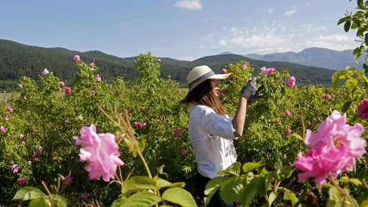 Beautiful Pictures From Europe's Valley of Roses