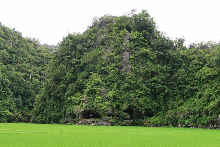 Leang Tedongnge, the cave where the oldest pig painting was found, is at the edge of ...
