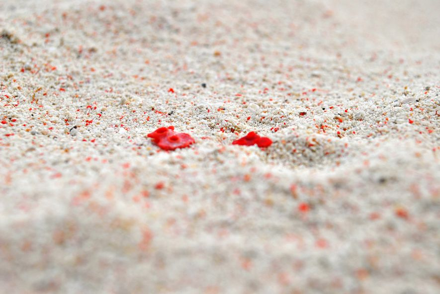 Red corals that break up in the sand make this Pink Beach on Great Santa Cruz ...