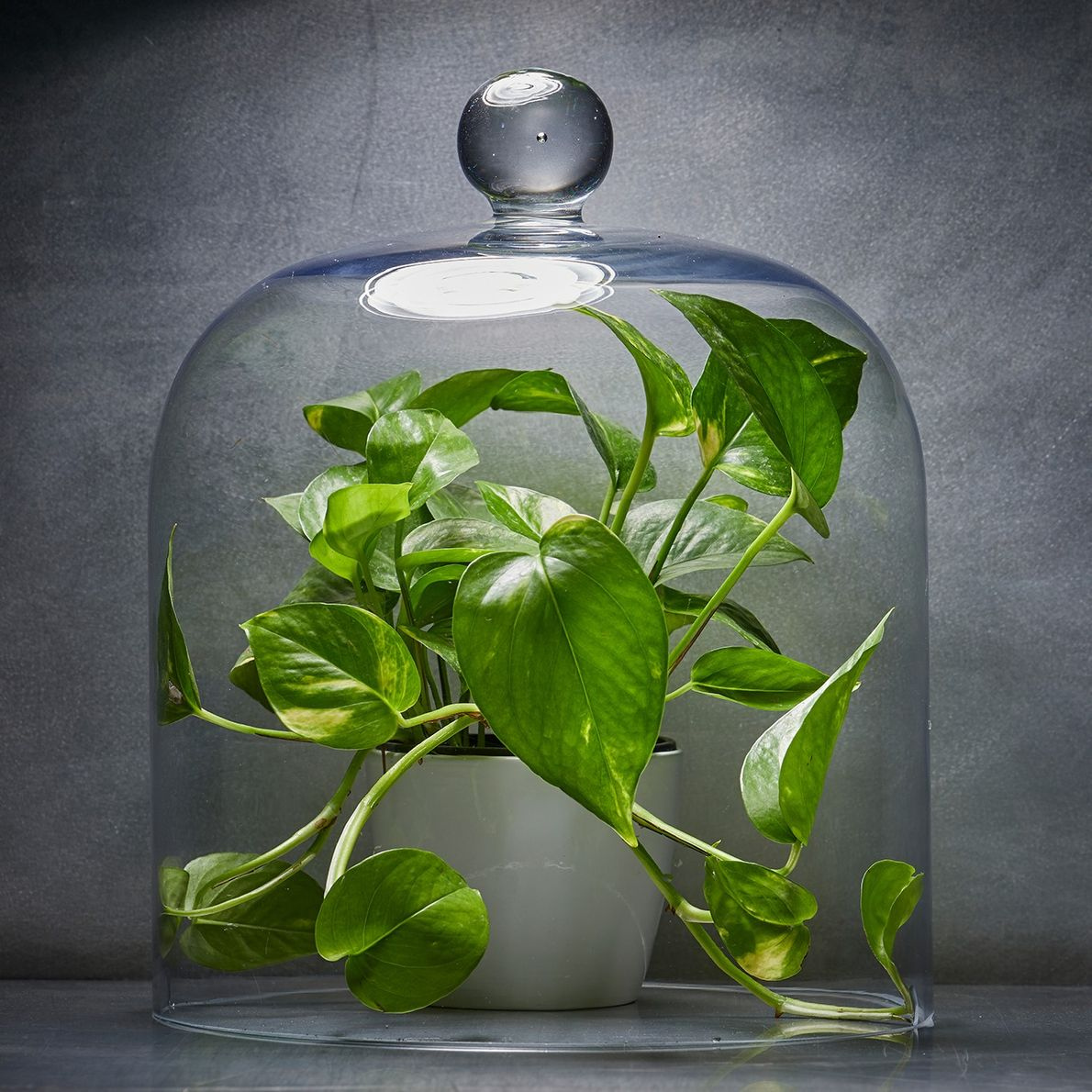 Which houseplants should you buy to purify air? None of them.