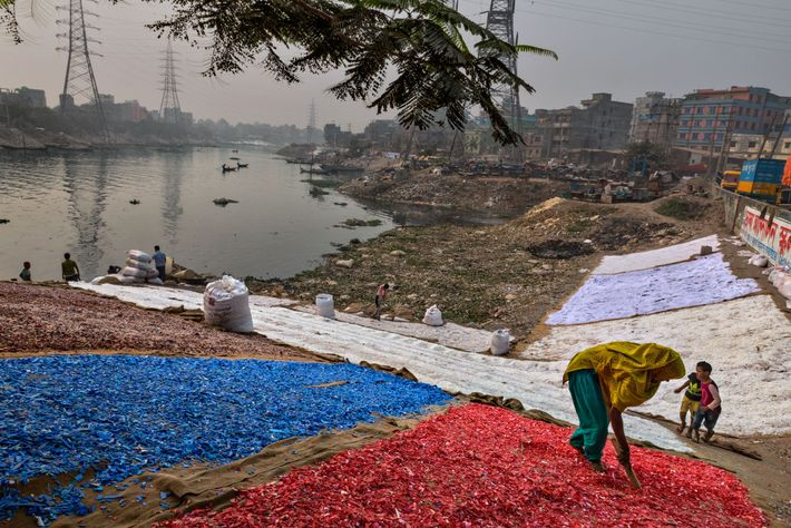 Colored chips of plastic—collected, washed, and sorted by hand—dry on the banks of the Buriganga. About ...