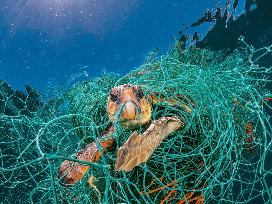 Plastic is turning the ocean into a minefield for animals