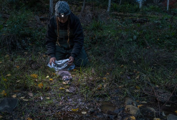 Tahneal Hawke of the University of New South Wales releases a platypus back into the Mita ...