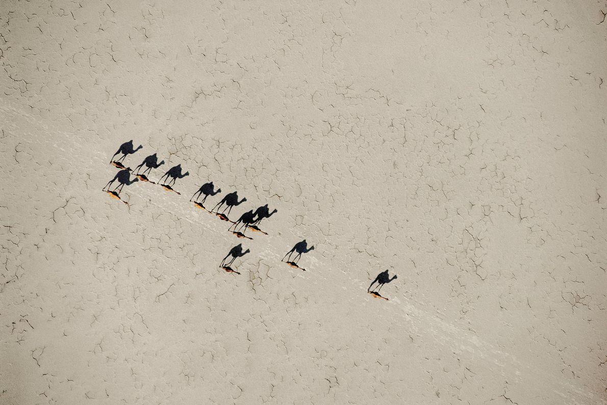 Crossing Camels