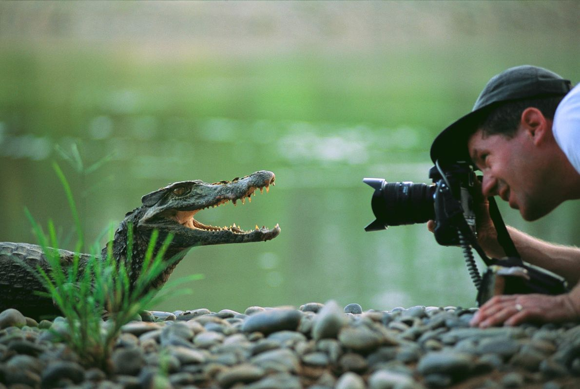 Photographer Joel Sartore photographs a juvenile caiman in Bolivia's Madidi National Park. Sartore would become the ...