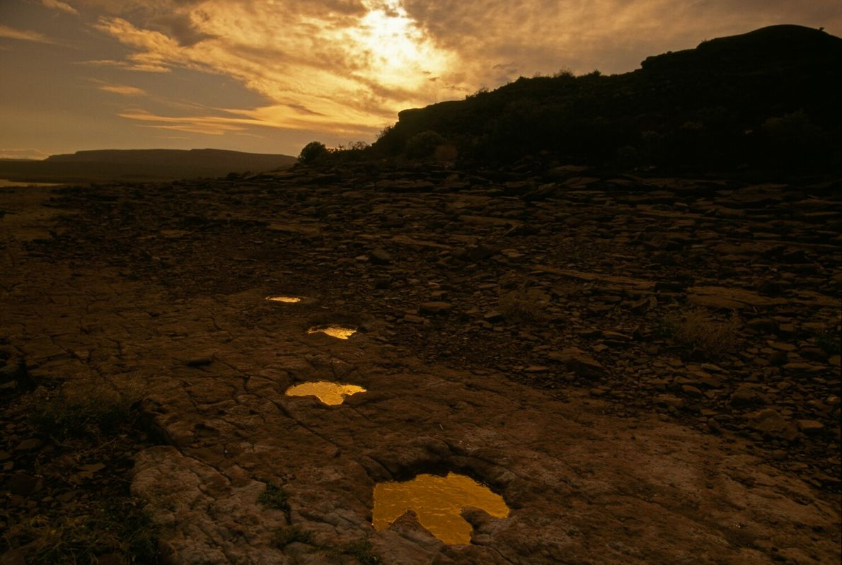 Three-toed dinosaur fossil tracks show where Limayichnus major once roamed in southern Argentina. This picture originally ...