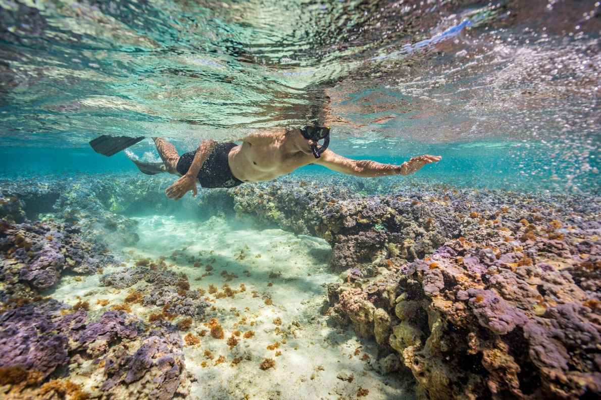 Former U.S. President Barack Obama snorkels in the waters off the Midway Islands in September 2016. ...