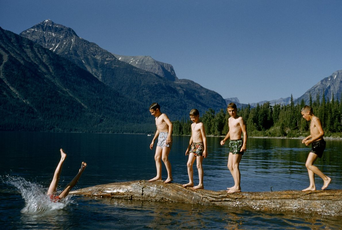 Kids use a fallen cottonwood tree as a diving board at Lake McDonald in Glacier National ...