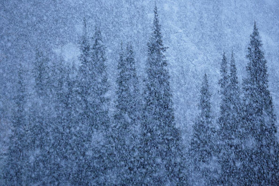 Serene Snow