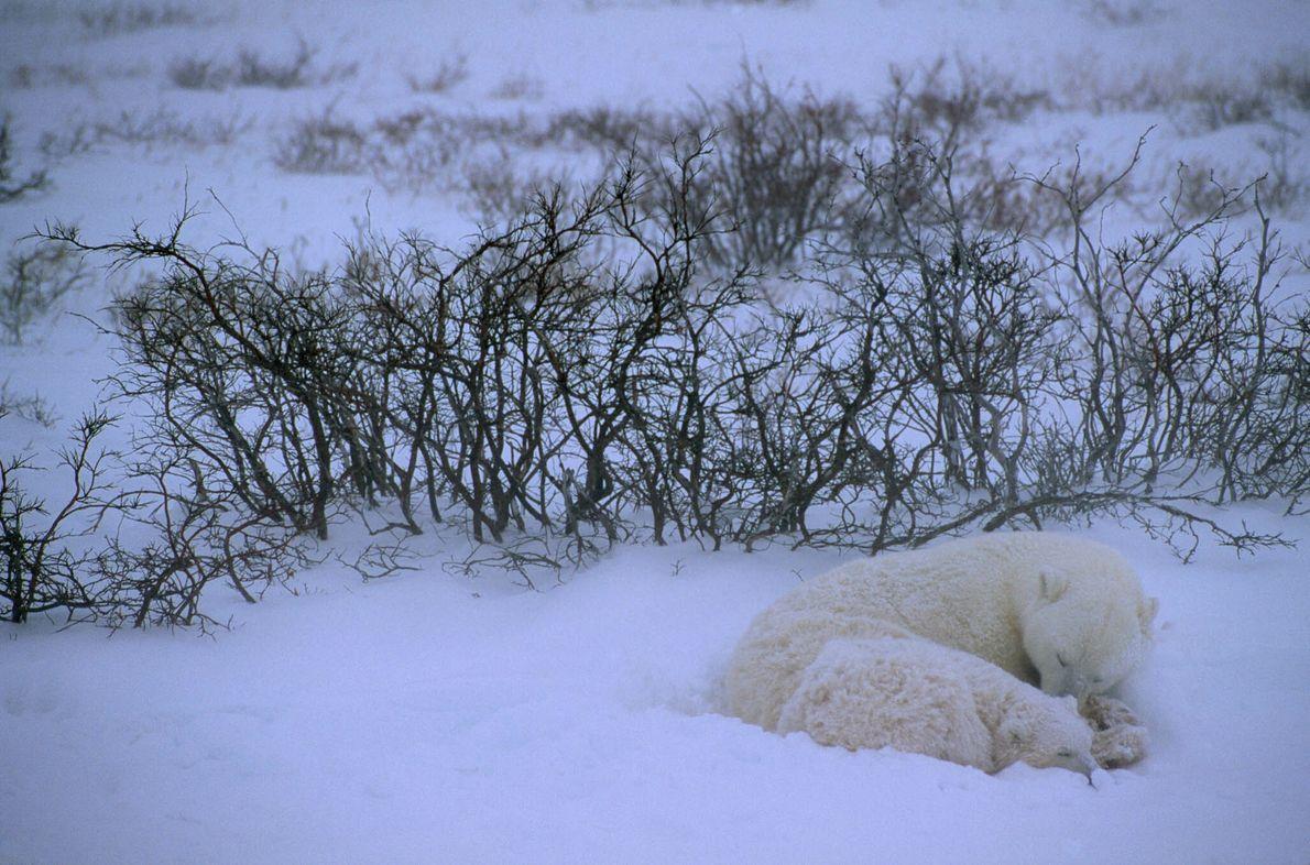 Winter Nap