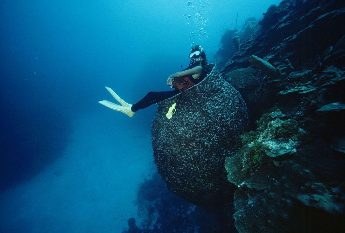 Diving Diversions